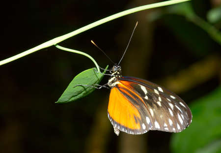 close-up of a beautiful butterfly photo