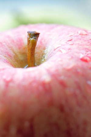 Macro photo of a fresh apple  Stock Photo - 811430