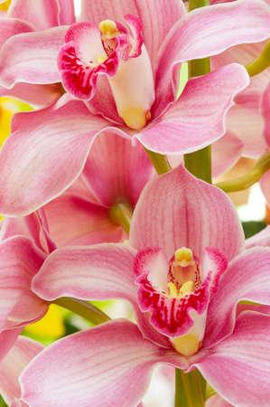 Makroaufnahme von bunten Orchideen für die Hintergründe