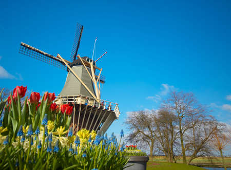 Dutch windmill and colorful tulips photo