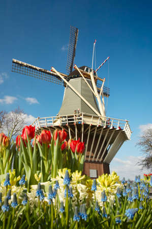 Niederländisch Windmühle und bunte Tulpen