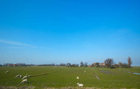 summer landscape in the netherlands Stock Photo - 842299