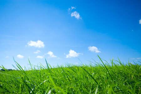 herbe ciel: Fra�che herbe verte avec fond de ciel bleu vif  Banque d'images