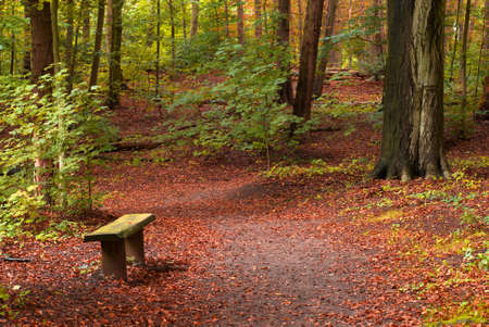Beautiful autumn colors in the forest Stock Photo - 1744143