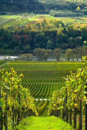 vineyards and forest along the mose riverl in germany Stock Photo - 1989850