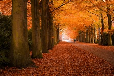 森の秋の色