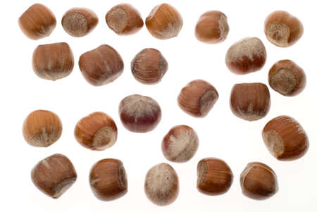 unsaturated: fresh hazelnuts isolated on a white background Stock Photo