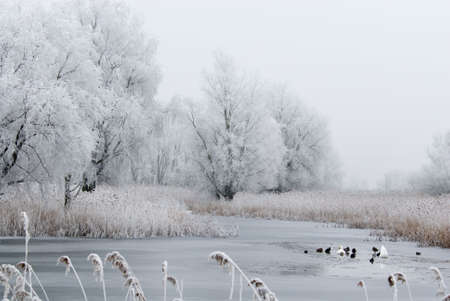 beautiful cold and white winter landscape