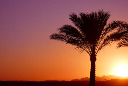palmtree: tropical sunset and palmtree