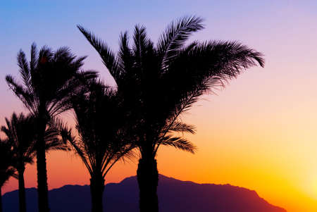 sheik: tropical sunset and palmtree