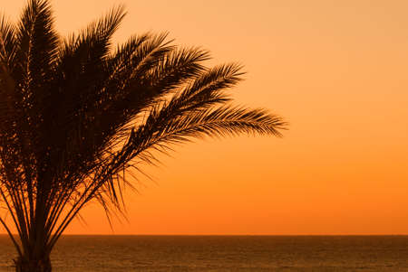 tropical sunset and palmtree  photo