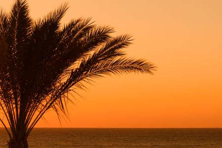 sheik: tropical sunset and palmtree