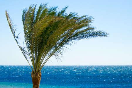 sharm el sheik: tropical palmtree and ocean Stock Photo