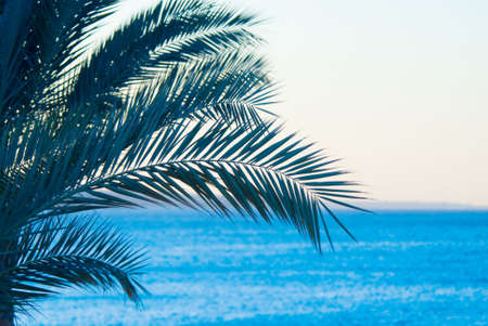 sheik: tropical palmtree and ocean Stock Photo