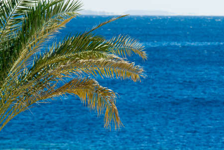 palmtree: tropical palmtree and ocean Stock Photo