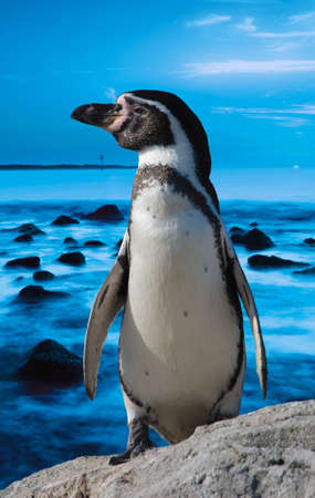 cute penguin with blue ocean background photo