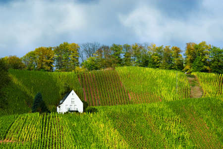 small house on the vineyards along the mosel river in germany Stock Photo - 2490888