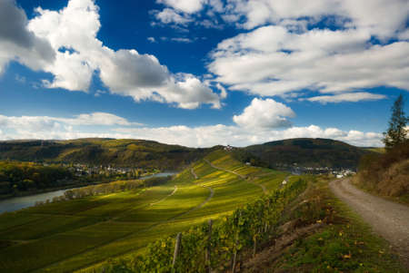 vineyards and forest along the mosel river in germany Stock Photo - 2490885
