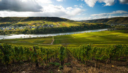 vineyards and forest along the mosel river in germany photo
