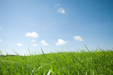 fresh green grass with bright blue sky summer background photo
