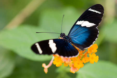 close-up of a beautiful butterfly Stock Photo - 2564533