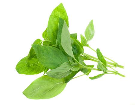tulsi: fresh basil isolated on a white background