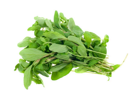 fresh marjoram herb isolated on a white background photo