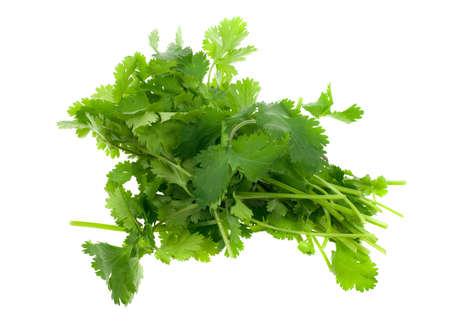 cilantro: cilantro fresco (cilantro) hierba aislados sobre un fondo blanco  Foto de archivo