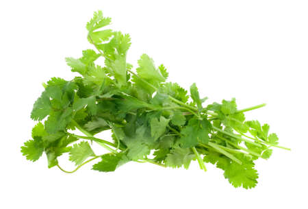 кинза: fresh coriander (cilantro) herb isolated on a white background