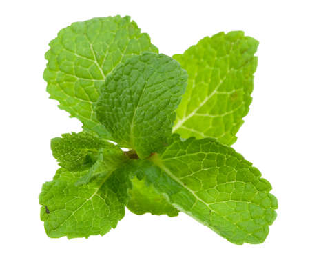 fresh mint leaves isolated on a white background photo