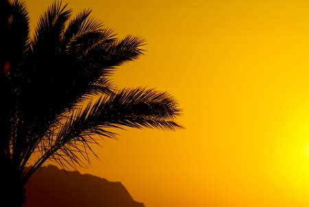 sheik: palmtree and sunset in egypt