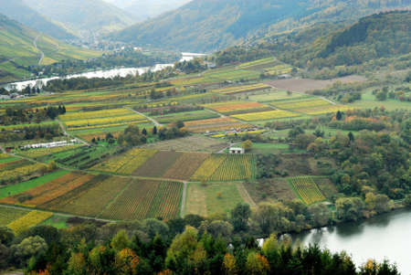 vineyards and forest along the mosel river in germany Stock Photo - 2758077