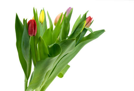 colorful tulips isolated on a white background Stock Photo - 2802895