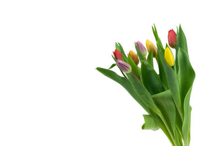 colorful tulips isolated on a white background Stock Photo - 2802898
