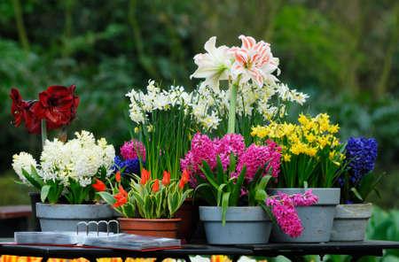 beautiful garden flowers in spring photo