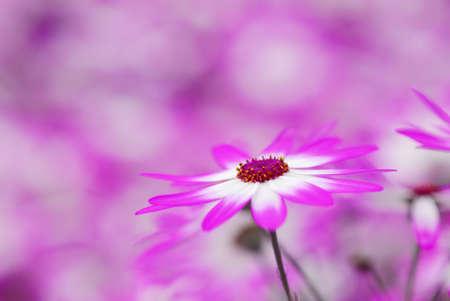 schönen Garten von bunten Blumen im Frühjahr (Keukenhof, Niederlande) Lizenzfreie Bilder