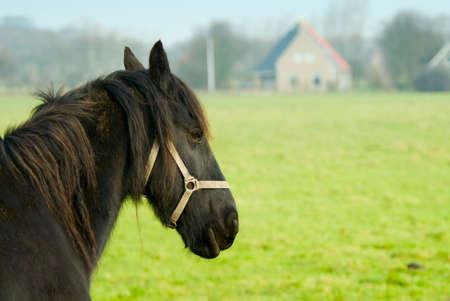 Beautiful horse in spring on farmland