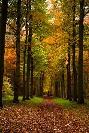 autumn colors in the forest photo