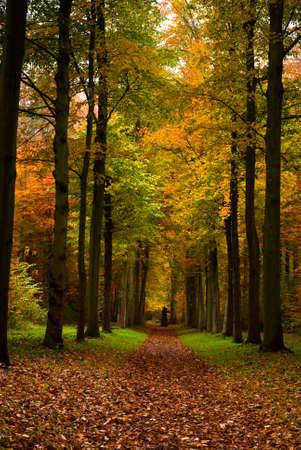 Herbst Farben im Wald  Lizenzfreie Bilder
