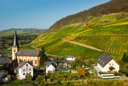 mosel: beautiful village and vineyards along the mosel river in germany