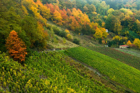 colorful autumn forest and vineyards along the mosel river in germany photo