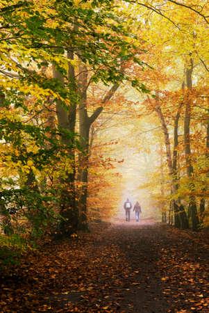 Herbst Farben im Wald