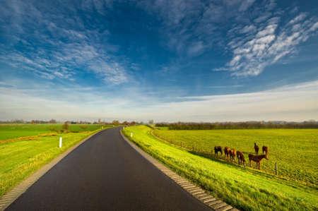Landstraße in den Niederlanden Standard-Bild - 3969438