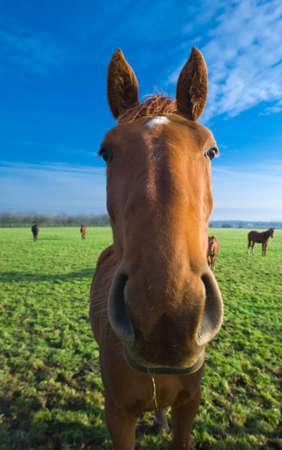 close-up of a horse on farmland photo