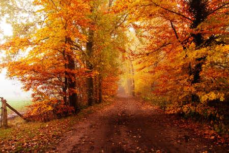 Herbst Farben im Wald mit einem Pferd stehend im Nebel auf der linken Seite Lizenzfreie Bilder