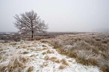 heathland: winter tree heathland in Drenthe, The Netherlands