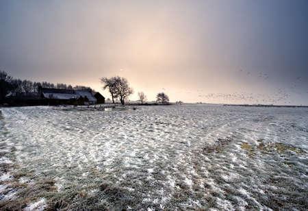 winter landscape in Friesland, The Netherlands photo