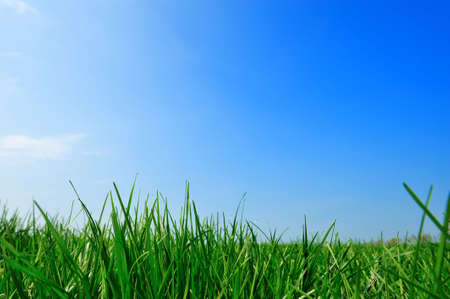 fresh green grass summer background Stock Photo - 4685100