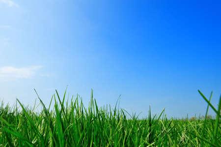 frische grüne Gras Sommer Hintergrund
