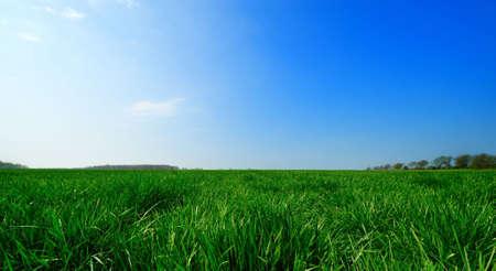 fresca hierba verde de verano de fondo